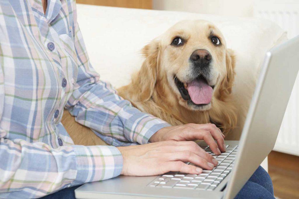 Ein paar einfache Schritte zu einer besseren Gesundheit von Haustieren