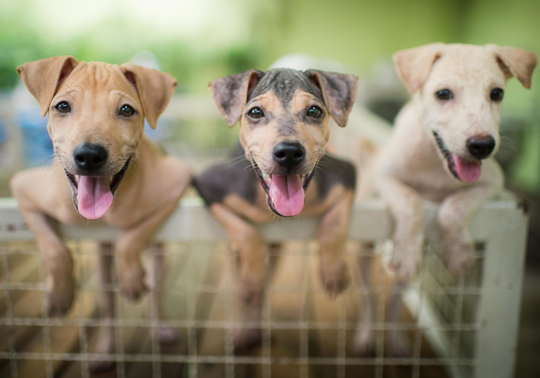 Tipps, um Pet Insurance zu bekommen