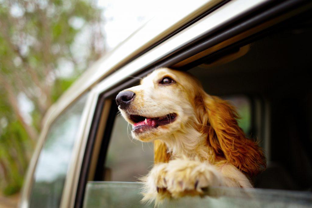 Zuverlässige Haustierversicherung für alle